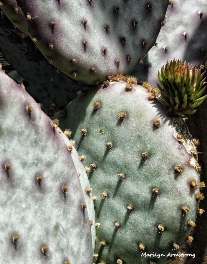 72-Cactus_1