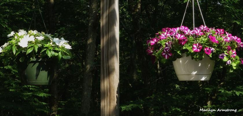 72-Deck-Flowers-02