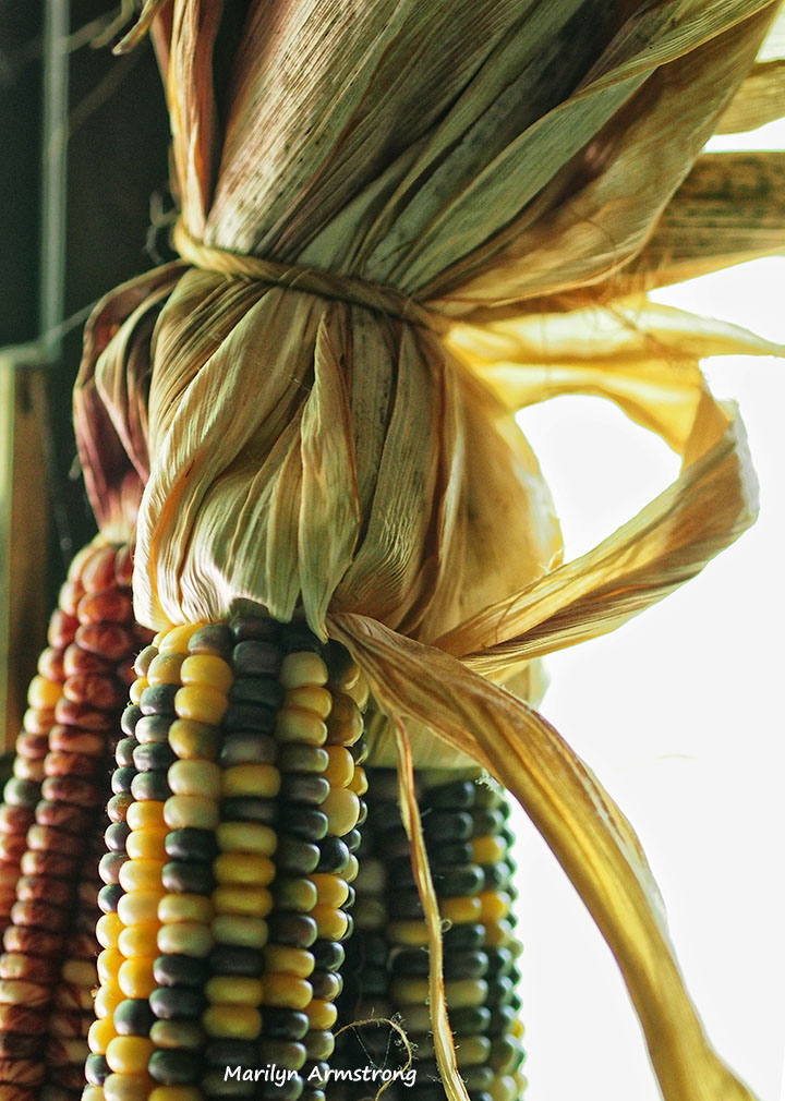 indian corn kitchen window