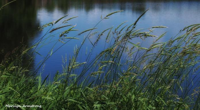River bend in june