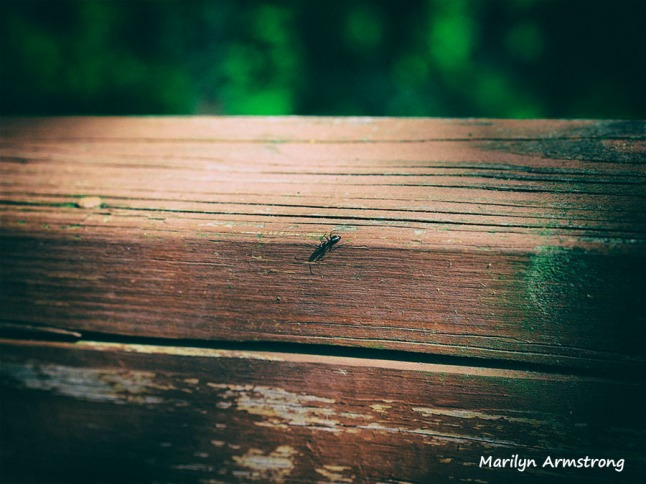 ant on deck rail