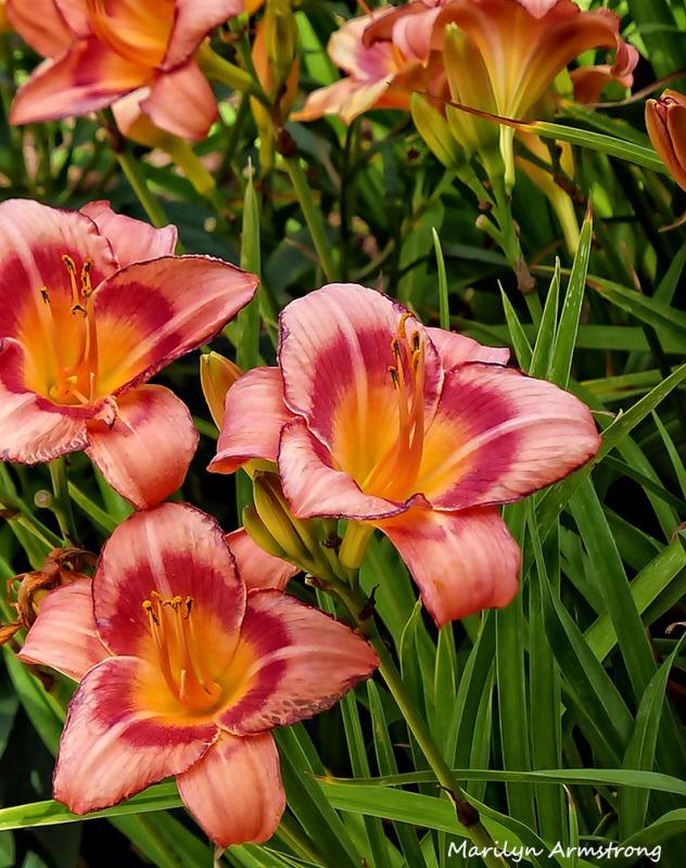 72-DF_Garden_08