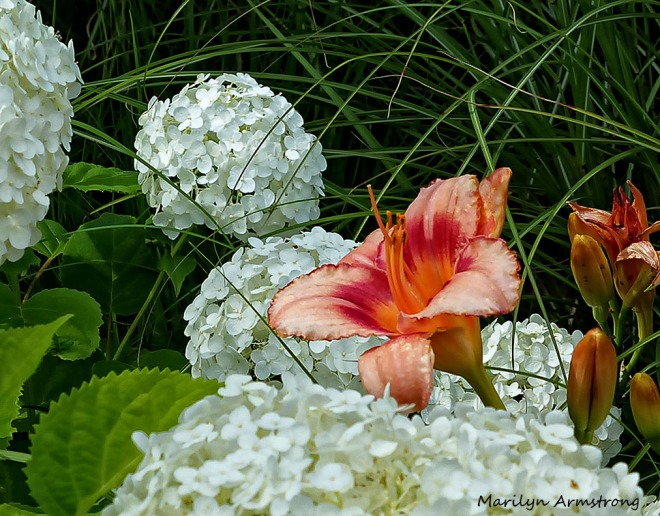 72-DF_Garden_17