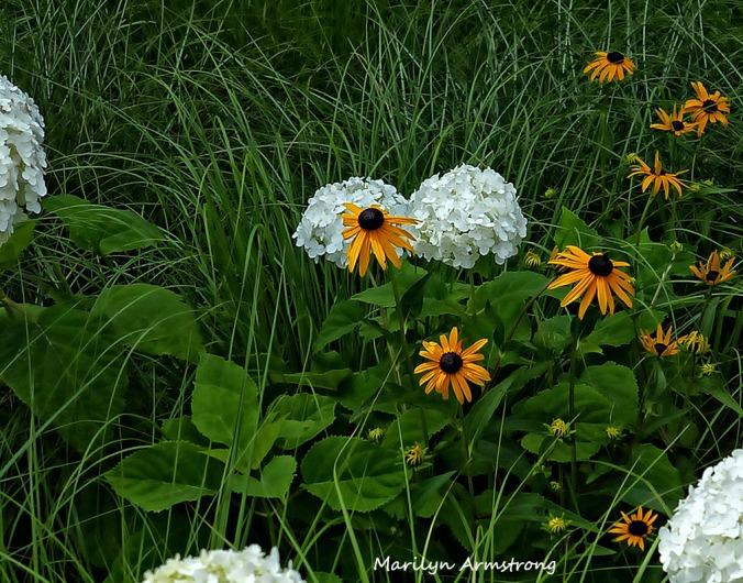 72-DF_Garden_26