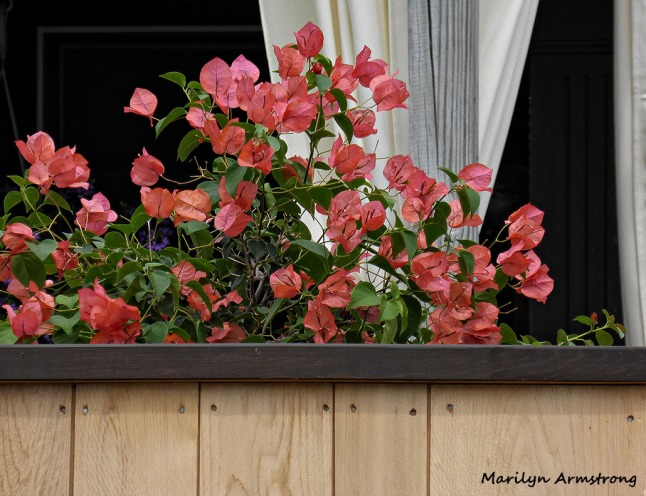 72-flowers-on-deck_08
