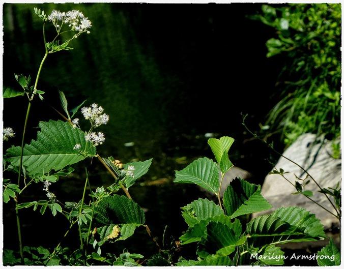 72-WhiteFlowers-RI-River_35