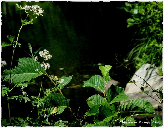72-WhiteFlowers-RI-River_35