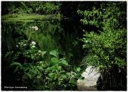 72-WhiteFlowers-RI-River_41