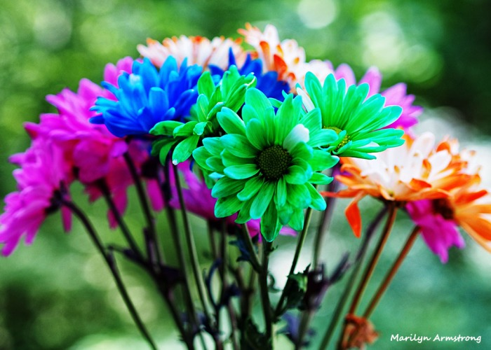 bouquet with bokeh 3