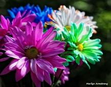 painted daises bouquet