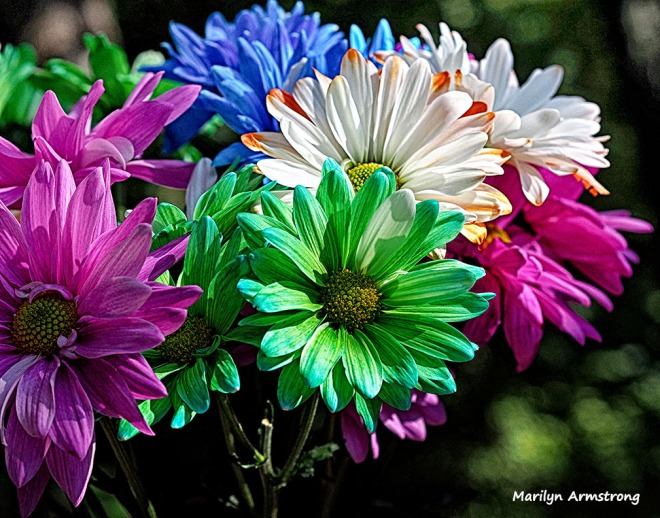 painted daisies bouquet