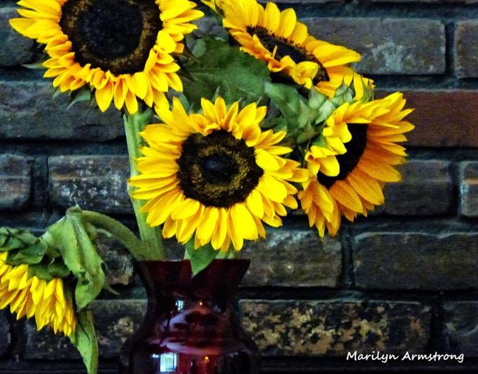 72-Sunflowers2_11