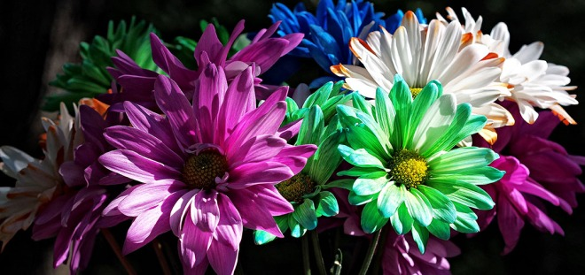 deck daisies flowers