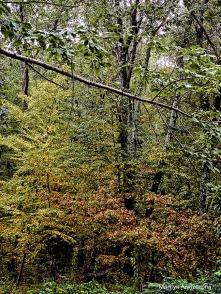72-fall-woods-9-21_06