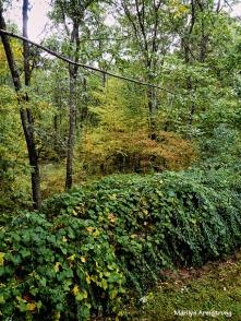 72-fall-woods-9-21_17