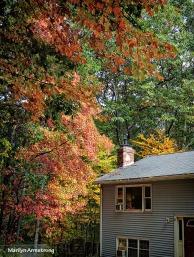 72-Foliage-9-29-14_006