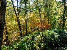 72-Foliage2014_053