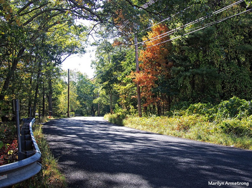 Autumn road to home