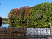 72-Heron_157 mumford dam autumn