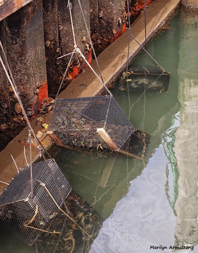 lobster traps hyannisport docks