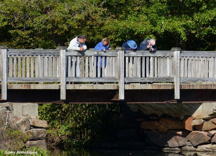 72-Riverbend-bridge-GAR-0919_037