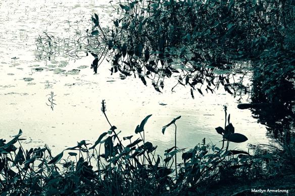 72-stillwater_tint_BW