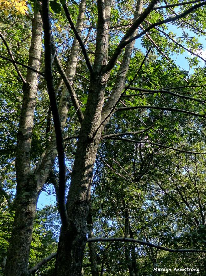 72-summer-woods_07