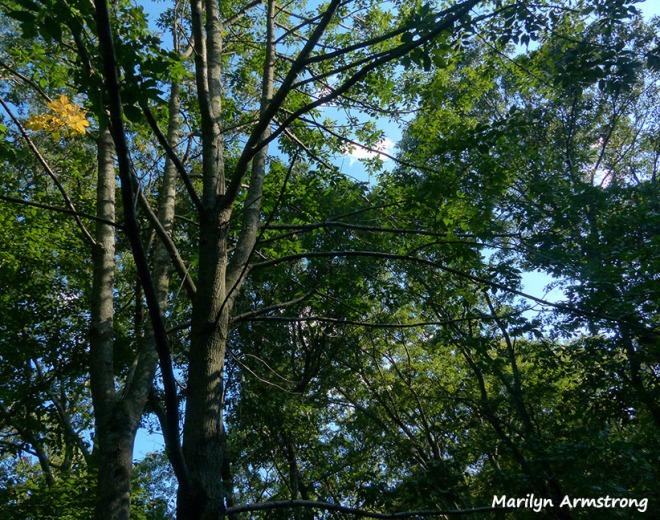 72-summer-woods_08