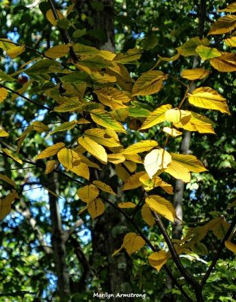 72-Yellow_15