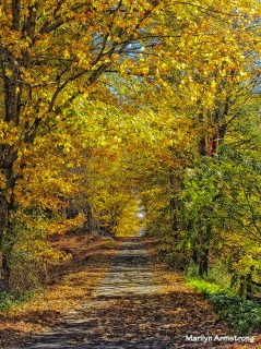 72-Country-Road_081