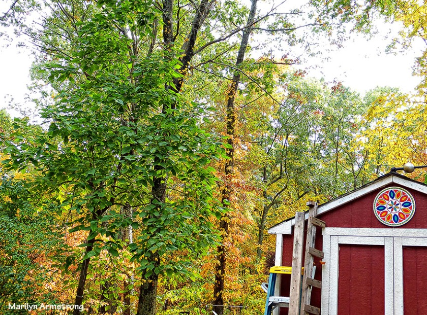 72-Foliage-9-29-14_034