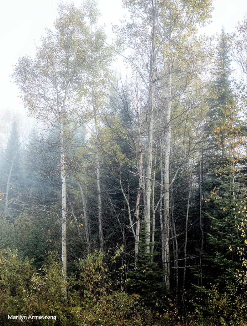 From the cabin porch, 8:30 am.