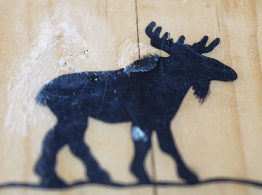 Moose embedded in wood countertop