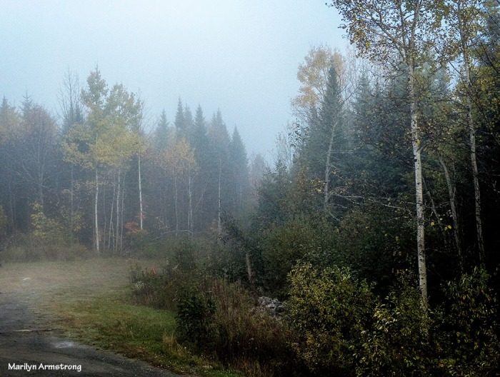 Trail by the cabin on a misty morning