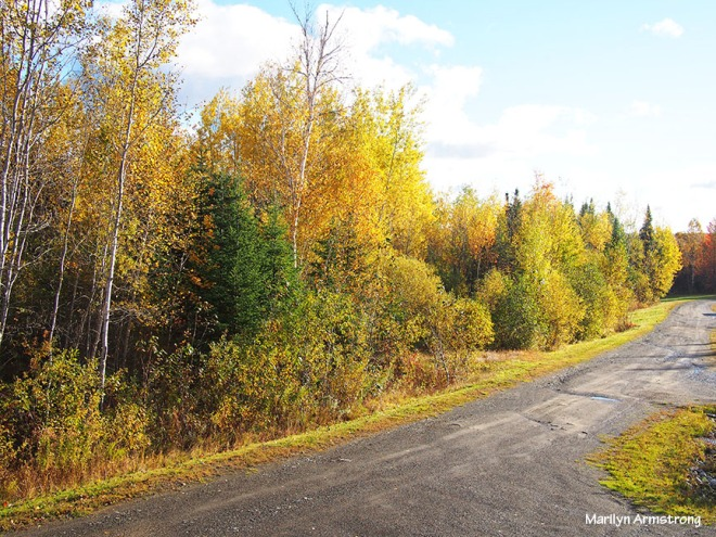 Jackman road autumn