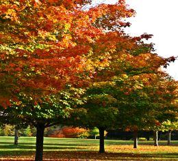 fall foliage riverbend