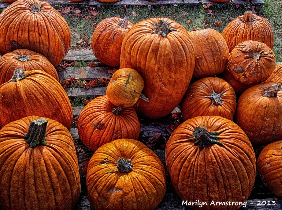 pumpkins on cape cod
