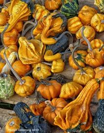 75-pumpkins on cape cod