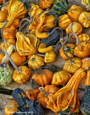 75-pumpkins on cape cod