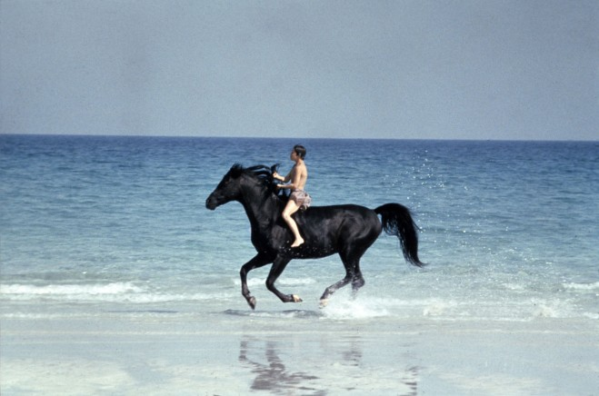Black Stallion Beach.jpg