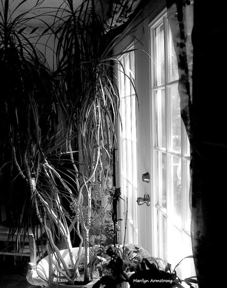 dining room window BW