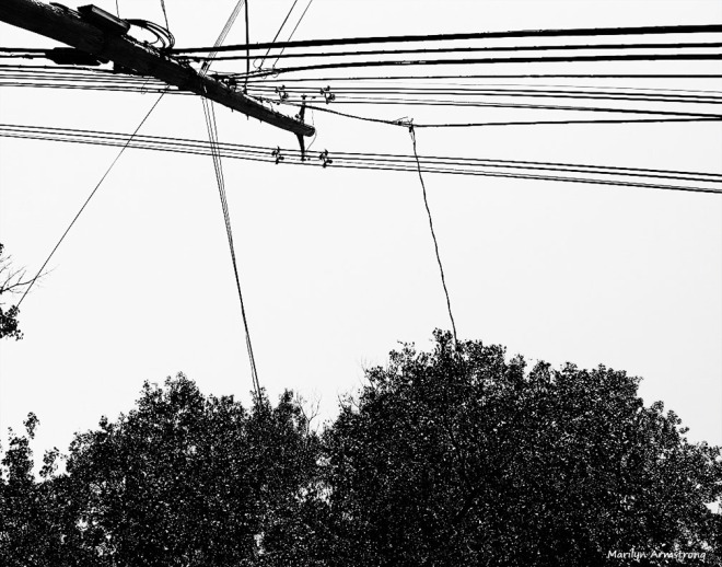 black and white wires power lines