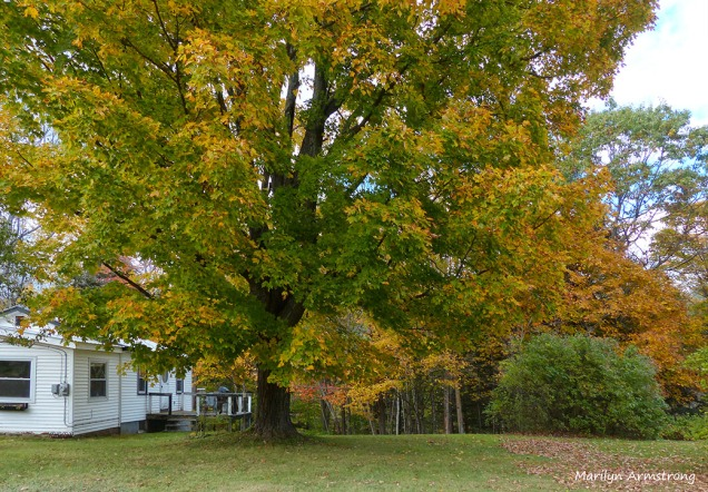 Little house under the big yellow tree