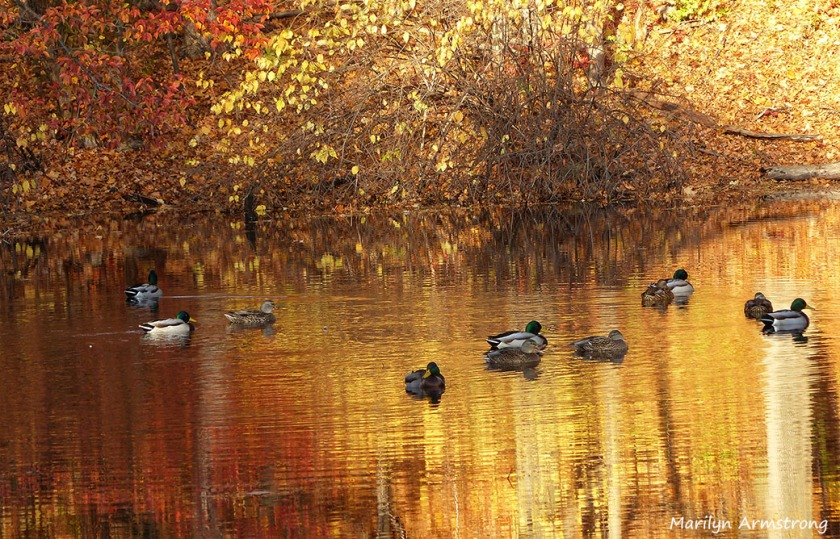 TWO BABY DUCKS AND A COUPLE OF KIDS – Serendipity – Seeking ...
