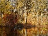 The River - Nov 2014