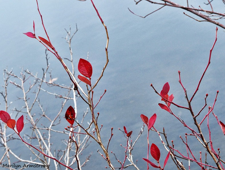 72-Red-Leaves_02