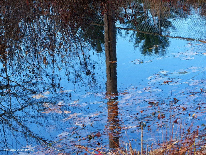 72-Reflection-Whitins-Pond_034
