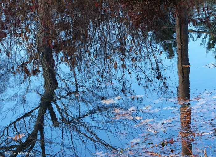 72-Reflection-Whitins-Pond_035