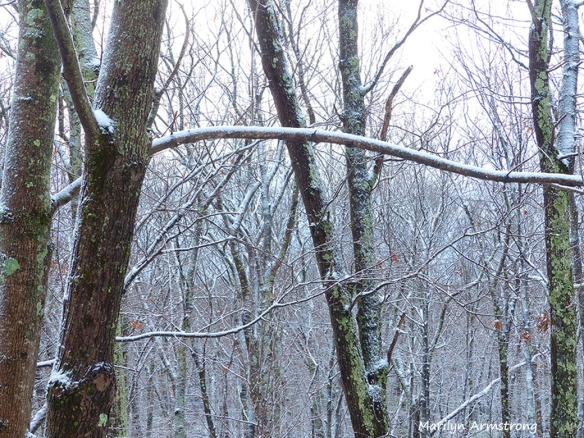 72-Thanksgiving-First Snow_01
