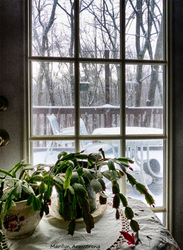 72-Thanksgiving-First Snow_22